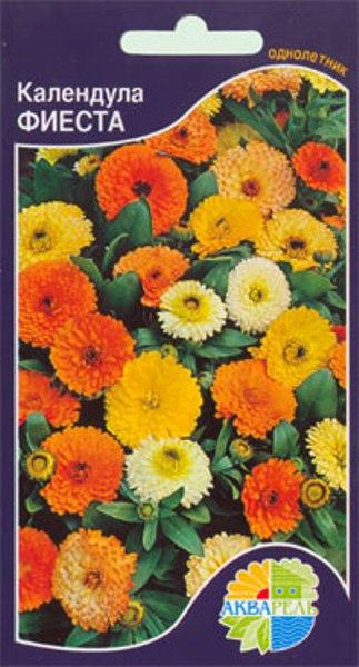 Календула мультиколор выращивание 83