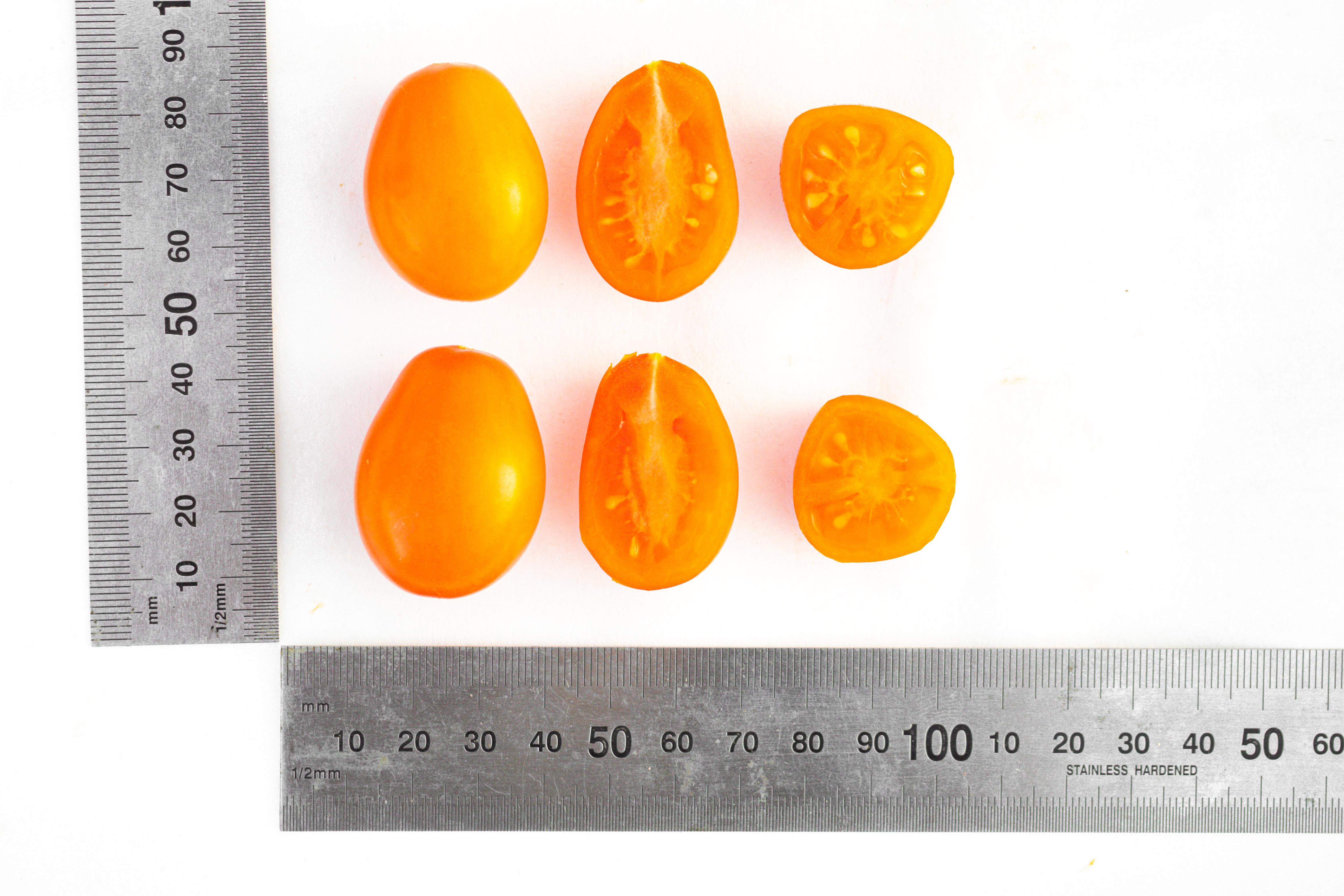томат цитрина отзывы фото фотографии, расположение достопримечательностей