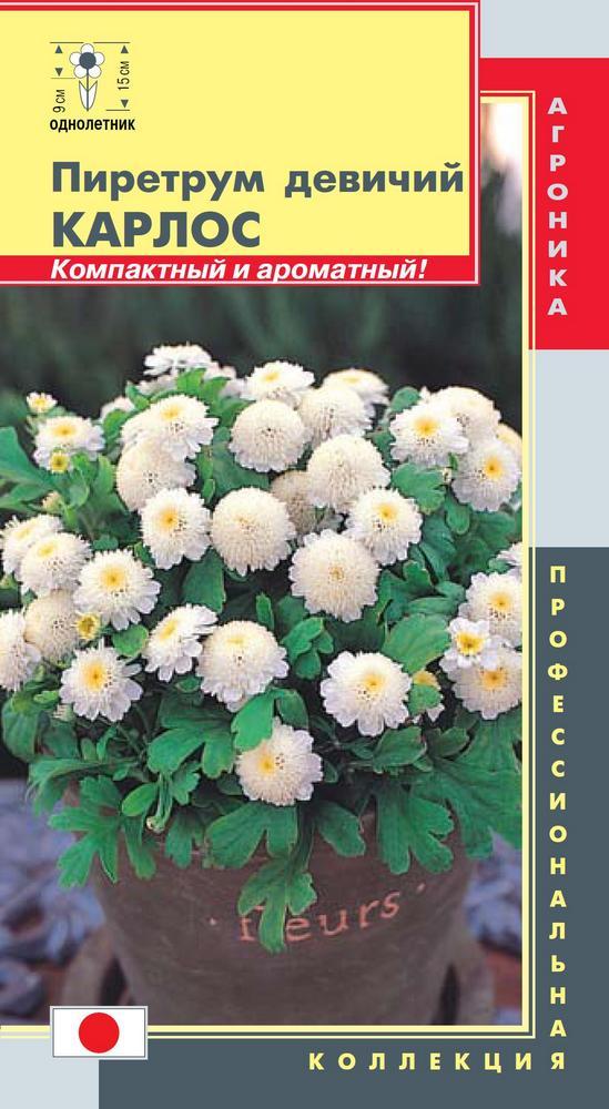Пиретрум цветы купить, цветы
