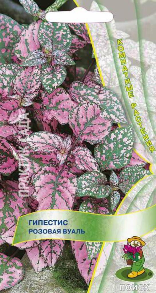 гипестис розовый мрамор из семян