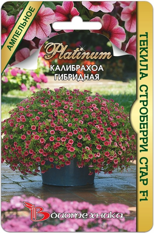 калибрахоа купить семена почтой в россии